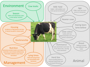 Factors affecting lameness