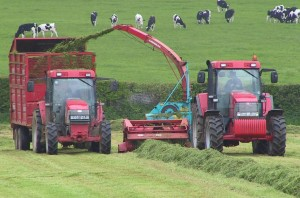 Silage making, if done well, retains more of the vitamin E than many methods of forage preservation.