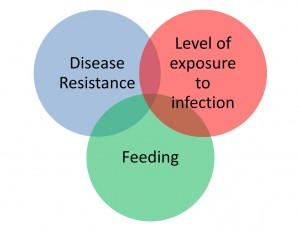Disease resistance, level of exposure to infection, feedng