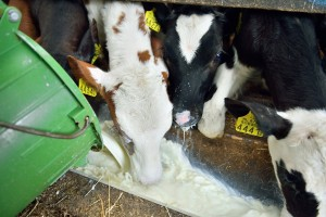 Feeding Pooled Milk