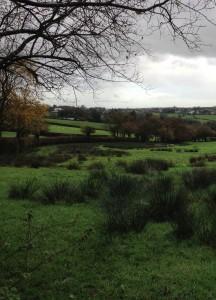 Liver fluke typical pasture