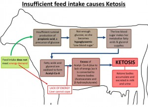 Ketosis diagram