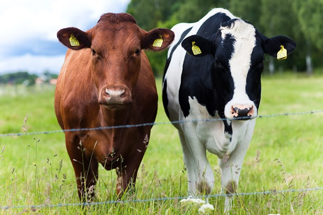 Farm Health Online Animal Health And Welfare Knowledge