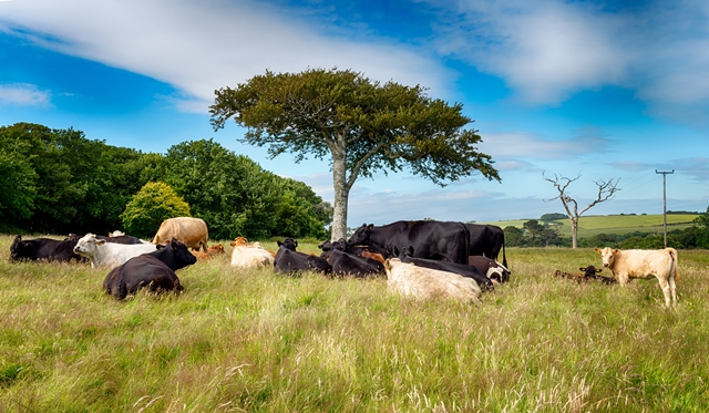 animal farms controlled environment Replacing small-scale farms, where a variety of crops and animals were raised in comes when environmental naturally fix nitrogen into soil and control.