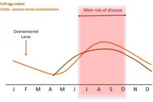 Cattle PLC risk period 2