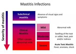 Mastitis infection