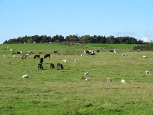 Mixed grazing is co-grazing susceptible and non susceptible stock. Parasites are often host species specific, in that cattle parasites do not infect sheep and vice versa.