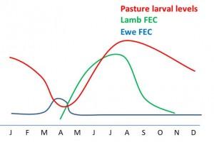 Sheep PLC risk period