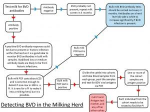 Detecting BVD in a milking herd