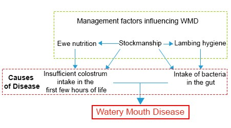 Illustration of the factors which causes Watery Mouth Disease