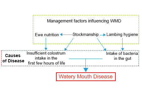 Farm health online animal health and welfare knowledge hub illustration of the factors which causes watery mouth disease fandeluxe Image collections