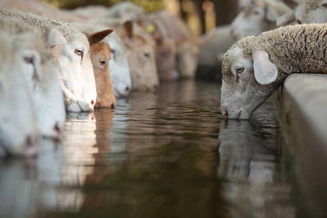 Farm Health Online – Animal Health and Welfare Knowledge Hub