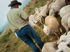 Shepherding 1
