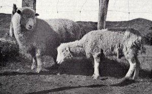CobaltDeficiency