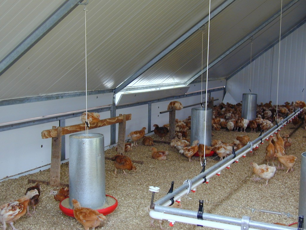Writing a business plan for chicken farming how to start poultry farming in nigeria business plan flashek Images