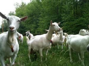 Ardith Mae Farm (AWA Farm)