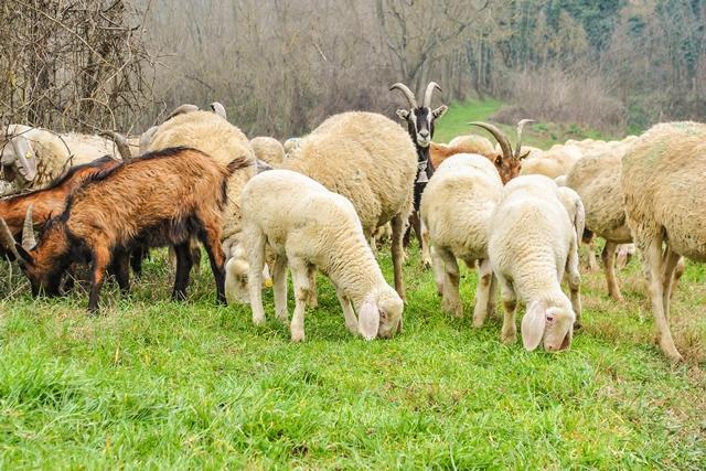 Farm Health Online – Animal Health and Welfare Knowledge Hub – Worms