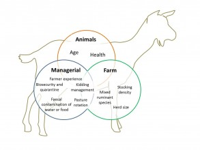 Risk factors for Johnes in goats