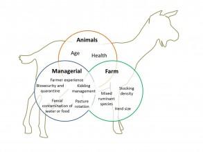 Risk factors for Johnes in goats