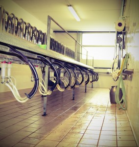Empty goat milking parlor