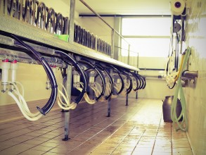 Empty goat milking parlor