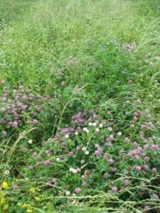 legumes&grasses